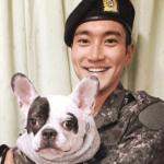【動画あり】SUPERJUNIORシウォンの犬に噛まれて韓国の有名レストランの社長が死亡
